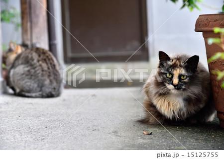 猫の写真素材 [15125755] - PIXTA