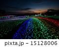 ライトアップ 東京ドイツ村 イルミネーションの写真 15128006