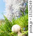 春のワンシーン 15136249