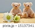 アネモネ ハナイチゲ ボタンイチゲの写真 15137341