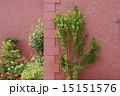 デンマークの植栽のある家 15151576