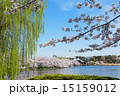 桜 花 公園の写真 15159012