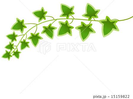 シンプルでかわいいリアル系アイビーつる植物イラスト素材のイラスト