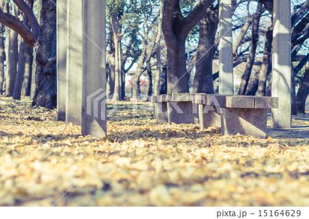 銀杏とベンチのある風景 15164629