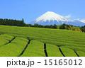 お茶 茶畑 山の写真 15165012