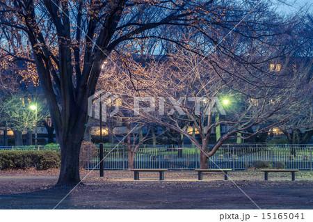 ベンチのある風景 夜の公園 15165041