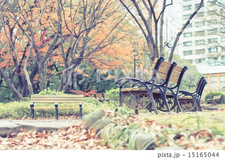 ベンチのある風景 日比谷公園 15165044