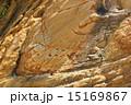 地殻変動 嘉陽層 地層の写真 15169867