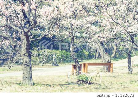 ベンチのある風景 旧芝離宮恩師庭園 15182672