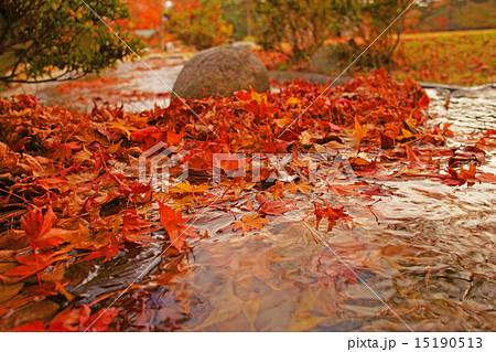 秋の風景 小川の中の紅葉  (信州 南箕輪村 大芝高原) 15190513