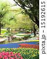 昭和記念公園 花 チューリップの写真 15192615