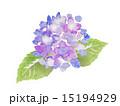 咲く 挿絵 花のイラスト 15194929