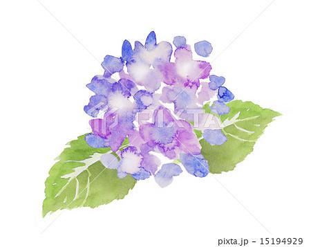 紫色のあじさい 水彩イラスト
