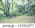 新緑 春 林の写真 15201977