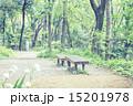 新緑 春 林の写真 15201978