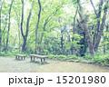 新緑 春 林の写真 15201980