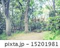 新緑 春 林の写真 15201981