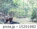 新緑 春 林の写真 15201982