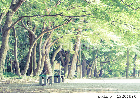 背景素材 ベンチのある風景 15205930