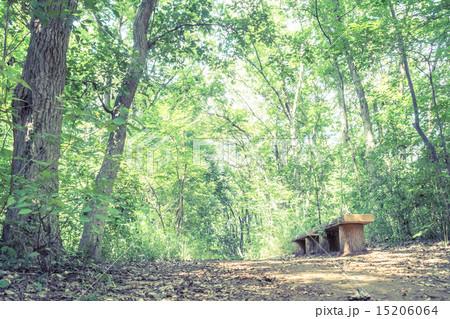 背景素材 ベンチのある風景 15206064