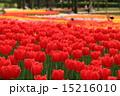 開花 木曽三川公園 花の写真 15216010