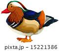 あひる アヒル 鳥のイラスト 15221386