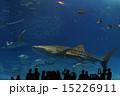 水族館 ジンベイザメ 15226911