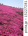 草花 お花畑 花の写真 15227281