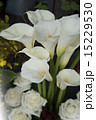 結婚式の花(カラーリリー) 15229530