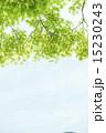 新緑と青空 15230243