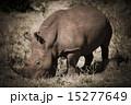 野生動物 ケニア 動物の写真 15277649