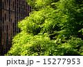 新緑の街路樹&ビル 15277953