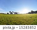 パームツリー 椰子の木 青空の写真 15283852