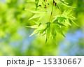 コピースペース 透過光 葉の写真 15330667