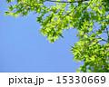 コピースペース 透過光 葉の写真 15330669
