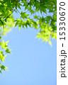 コピースペース 透過光 葉の写真 15330670