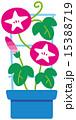 アサガオの鉢植え 15388719