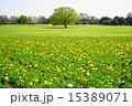 4月花 ポピー・ケシ科49昭和記念公園 15389071