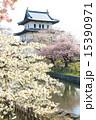 松前城 さくらまつり <満開> 15390971