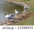 稲毛海浜公園 ユリカモメ 野鳥の写真 15398635