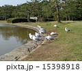 稲毛海浜公園 ユリカモメ 野鳥の写真 15398918