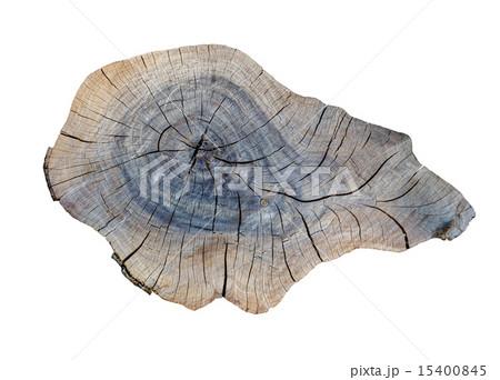 cracking teak tree slice 15400845
