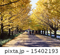 昭和記念公園 銀杏並木 公園の写真 15402193