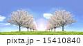 桜並木 草原 青空 左右対称 逆光 合成 15410840