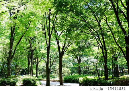新緑の新宿中央公園 15411881