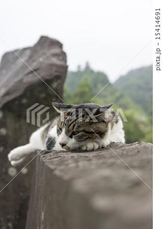 宮ヶ瀬湖畔園地 猫 15414691