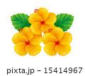 ハイビスカス/黄色 15414967