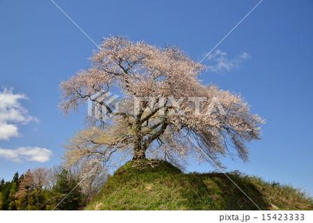 福島県三春町・平堂壇の桜 15423333
