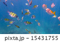 魚 南国 水中の写真 15431755