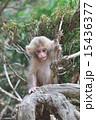 遊ぶ赤ちゃん 15436377